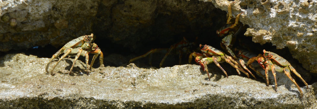 several crabs on a beach